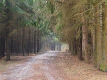 Wald der Straße im Frühjahr stockbild