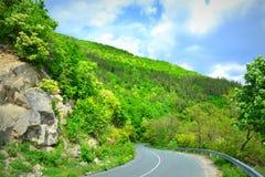 Wald der Straße im Frühjahr Stockfotografie