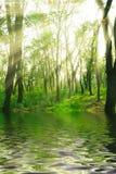 Wald der Sunbeams im Frühjahr Lizenzfreies Stockfoto