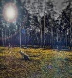Wald in der Unschärfe stockfotos