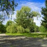 Wald der Weide im Früjahr Stockfotos