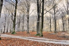 Wald in der Wintersaison Stockfotos