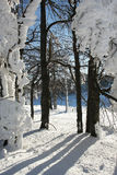 Wald in der Winterzeit Stockfotografie