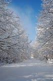 Wald in der Winterzeit Lizenzfreie Stockbilder
