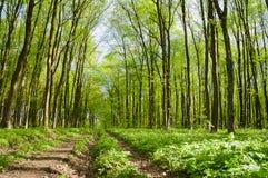 Wald des Fußwegs im Frühjahr stockfotos