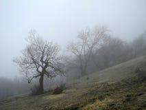 Wald des Nebels im Frühjahr stockfotos