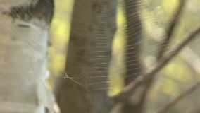 Wald des Netzes im Frühjahr stock footage