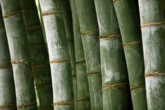 Wald des riesigen Bambusses Stockfotos