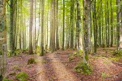 Wald des Sonnenaufgangs im Früjahr Lizenzfreie Stockbilder