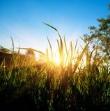 Wald des Sonnenuntergangs im Frühjahr Lizenzfreie Stockfotos