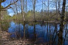 Wald des Teichs im Frühjahr Stockfoto