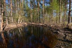 Wald des Teichs im Frühjahr Stockfotos