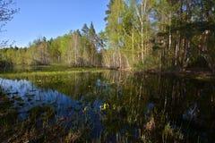 Wald des Teichs im Frühjahr Lizenzfreie Stockfotografie