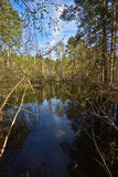 Wald des Teichs im Frühjahr Stockbilder