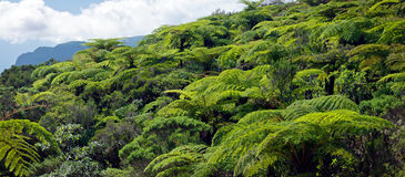 Wald des tropischen Regens Stockfoto