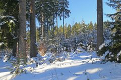Wald des verschneiten Winters lizenzfreie stockfotografie