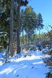 Wald des verschneiten Winters stockbild
