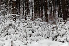 Wald des verschneiten Winters lizenzfreie stockbilder
