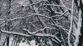 Wald des verschneiten Winters stock footage