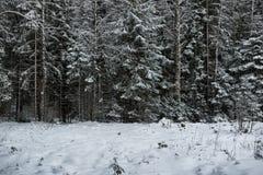 Wald des verschneiten Winters Stockfotos