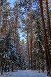 Wald des verschneiten Winters an einem sonnigen Tag Weißer Schneeweg Schneebedeckte Bäume auf einem Hintergrund des blauen Himmel stockfotos