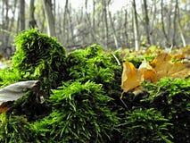 Wald des Wegs im Frühjahr lizenzfreie stockbilder
