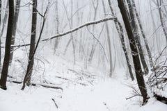 Wald des Weihnachtsmysteriöser verschneiten Winters Stockbild