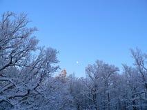 Wald des Winters Stockbild