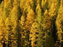 Wald in Dolomiti lizenzfreies stockfoto