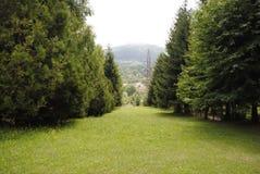 Wald drei Stockfoto