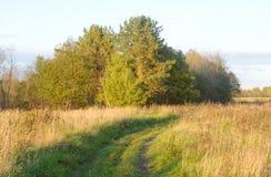 Wald durch die Glättung Lizenzfreies Stockbild
