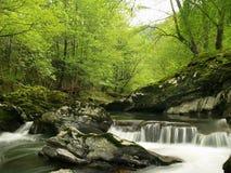 Wald durch einen Fluss Stockfotografie