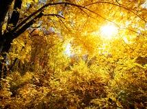 Wald an einem hellen Tag Lizenzfreie Stockbilder