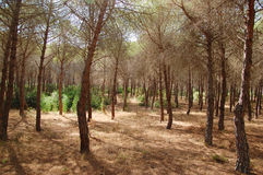 Wald in einem Naturreservat von WWF Lizenzfreies Stockfoto