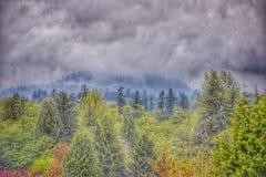 Wald in einem Regensturm lizenzfreie stockbilder