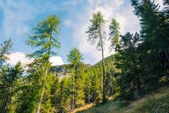 Wald an einem sonnigen Tag Stockbild