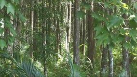 Wald an einem windigen Tag stock footage