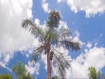 Wald an einem windigen Tag stock video footage