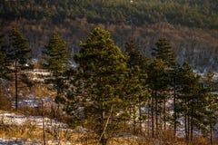 Wald in einer Linie lizenzfreie stockbilder