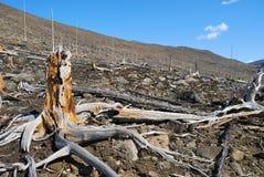 Wald eines dieses Jahrtausends Lizenzfreies Stockfoto