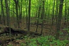 Wald entlang der Eiszeit-Spur Stockbilder