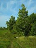 Wald entlang der Straße im Sommer Lizenzfreies Stockbild
