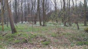 Wald, floresta foto de stock
