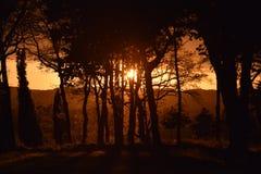 Wald/Forêt Stockfotografie