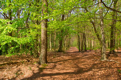 Wald am Frühjahr lizenzfreie stockfotos