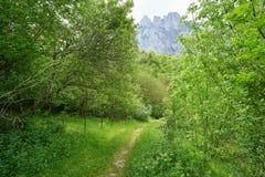 Wald Fuente De mountains in Camaleno Kantabrien stockbild