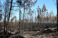 Wald gebrannt lizenzfreie stockfotografie