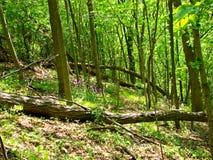 Wald gefällter Baum Stockfotos