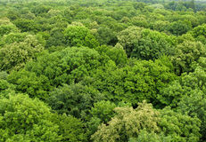 Wald gesehen von oben Stockfotos