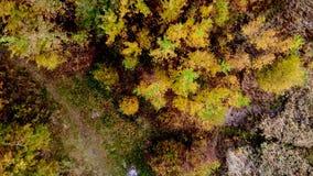 Wald gesehen von oben Schönes, buntes Holz im Herbst stock video footage